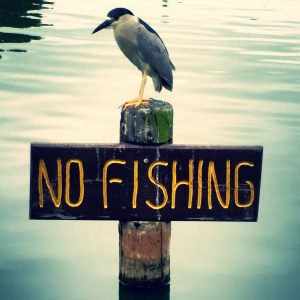 Bird enforcement.